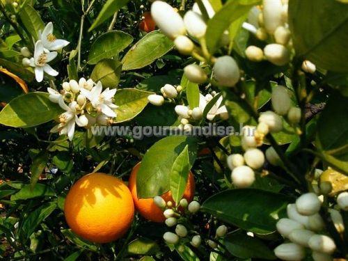 Aroma cvijeta naranče